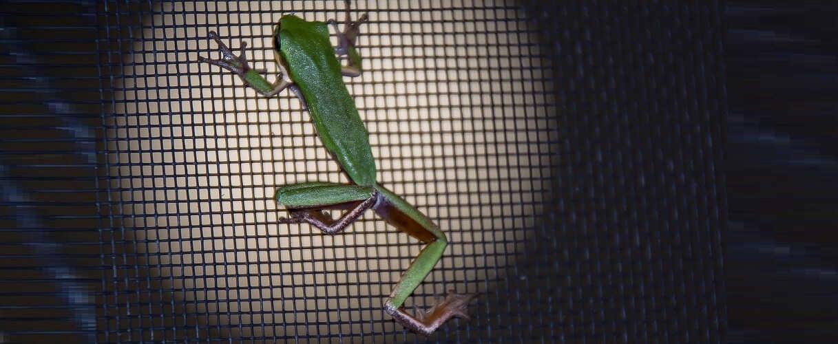 Türen Fliegengitter, Insektenschutz & Moskitonetze gimp 50